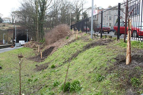 community-garden-trees