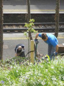 Community Garden sessions @ Saint Leonards | United Kingdom