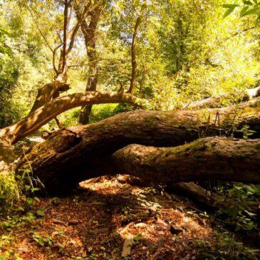 Ore Community Land Trust