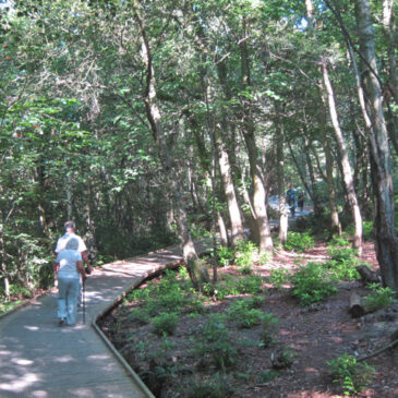 Mallydams Wood
