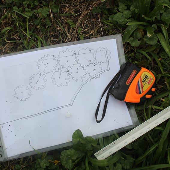 plan_in_grass